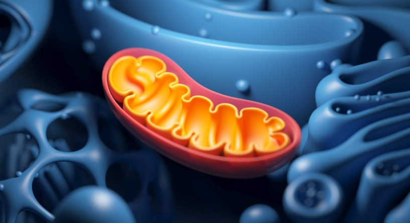 NEWSLETTER: The Accumulation of Deuterium in the Body and Mitochondria